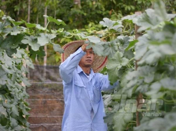 Pembangunan sektor pertanian menjadi lebih holistik apabila kita menilai keseluruhan rantaian pertanian. Gambar hiasan.