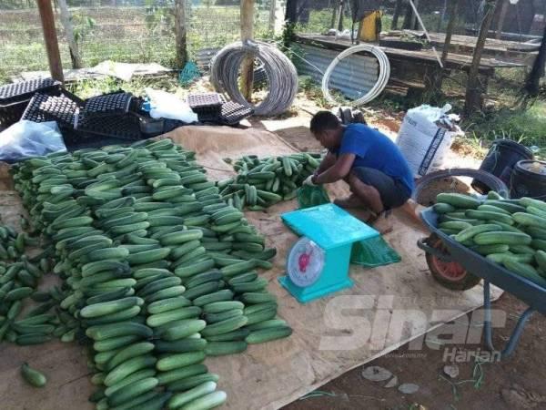 Penggunaan teknologi penyimpanan makanan canggih membantu para petani dengan menstabilkan harga pasaran sambil membina jumlah komoditi untuk disimpan. Gambar hiasan.